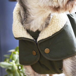 Fetch and Follow Deep Green Winter Dog Coat