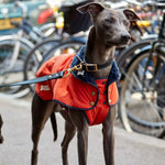 Fetch and Follow Bright Orange Winter Dog Coat