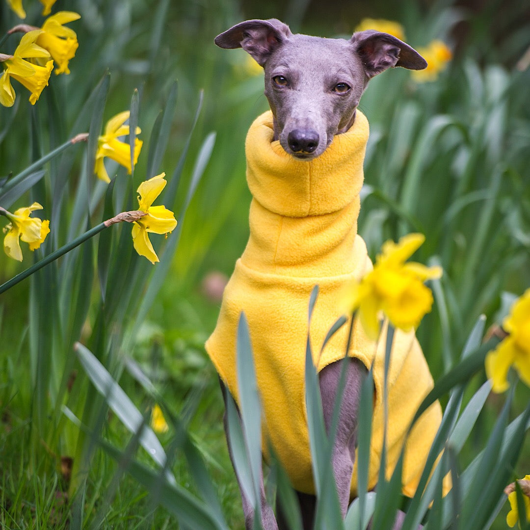 Redhound for Dogs Yellow Fleece Jumper