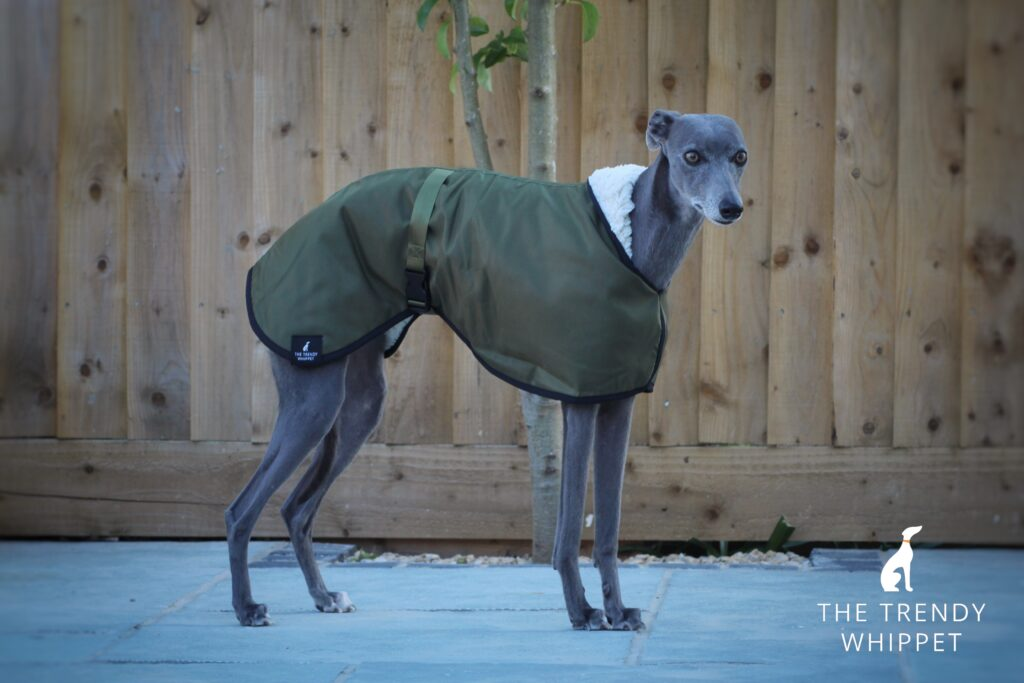 The Trendy Whippet Waterproof Olive Green Sighthound Coat