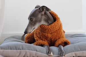 The Trendy Whippet Teddy Bear Fluffy Sighthound Onesie Pyjamas