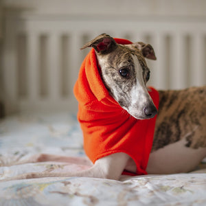 Redhound for Dogs Orange Snood