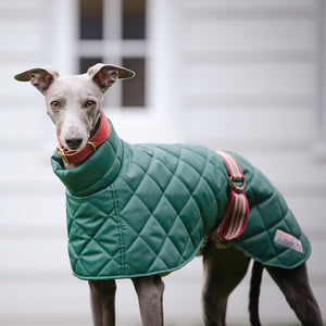 Redhound for Dogs Surrey Washable Sea Green Hound Coat