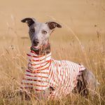 Redhound for Dogs Stripey Tee Shirt