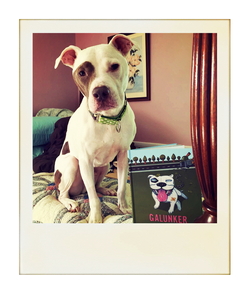 A cute pit bull sitting by a copy of Galunker - The book starring a pitbull