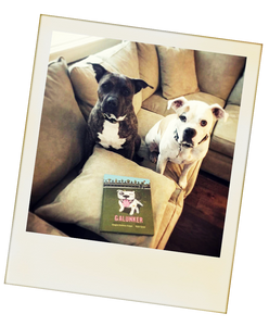 2 cute pit bulls with a copy of Galunker - The book starring a pitbull