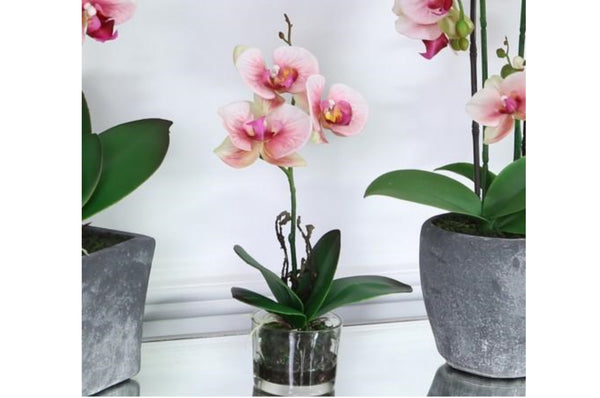Pink Real Touch Orchid In Glass Display Pot