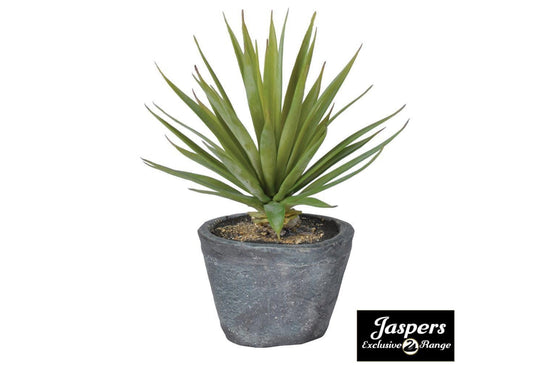 Green Spikey Airplant in Dark Grey Cement Pot