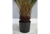 Artificial Cycad Plant - Black / Green-Livingroom Furniture-Jaspers of Hinckley Ltd.