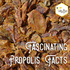 Fascinating propolis facts!