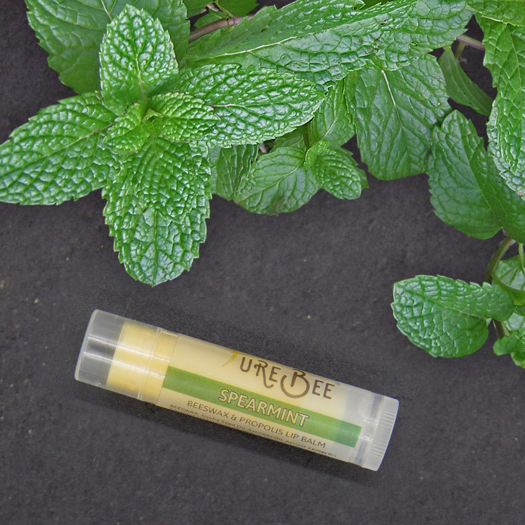 PureBee Spearmint Lip Balm