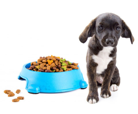 Are You Feeding Your Dog the Right Amount?