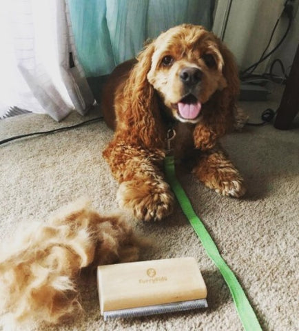 dog deshedding brush review by furry fido customer