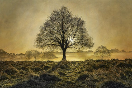 One Tree Hill Richmond Park by Mark S Payne