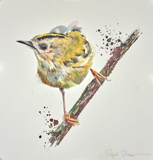 Goldcrest by Sarah Stokes