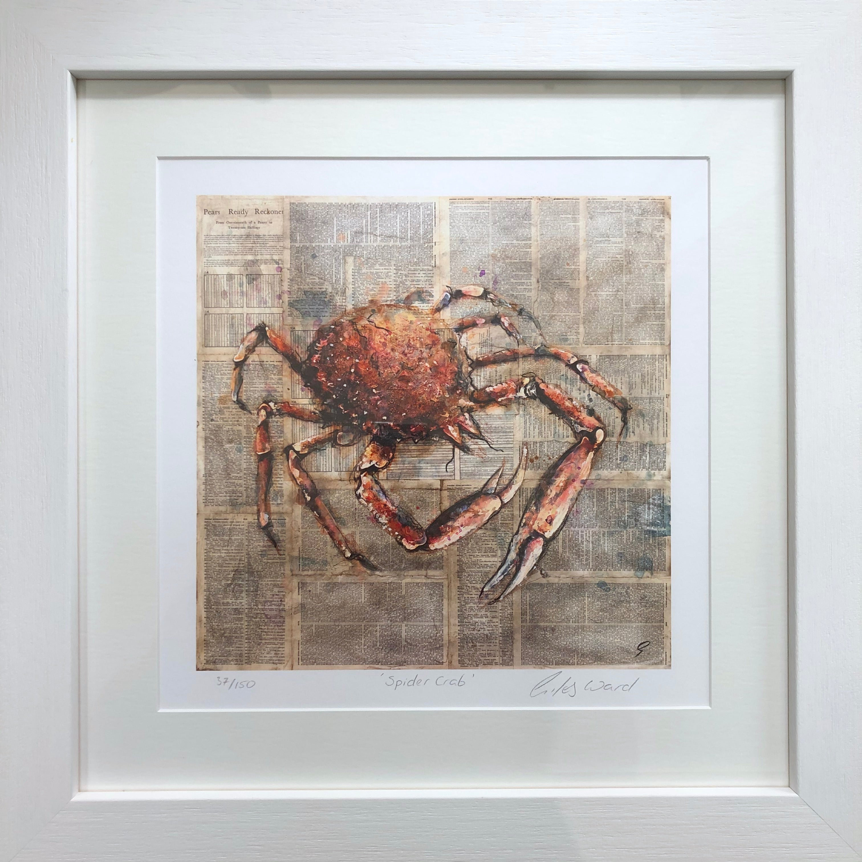 Spider Crab by Giles Ward