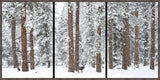Babe in the Woods Triptych Art Prints by Robert Dawson Artist