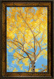 Aspen Glow Framed Giclee Canvas by Dan Ballard