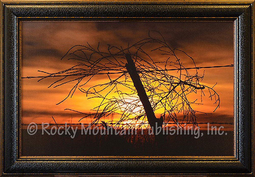 Blowing in the Wind Framed Giclee Canvas by Dan Ballard