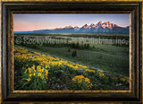 Gathering Light Framed Giclee Canvas by Dan Ballard