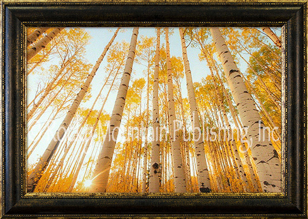 Looking Up Framed Giclee Canvas by Dan Ballard