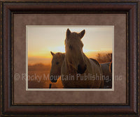 Paired Up Framed Print by Dan Ballard