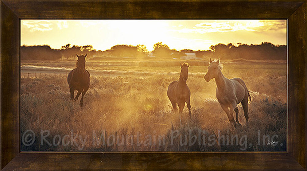 Room to Run Framed Giclee Canvas by Dan Ballard