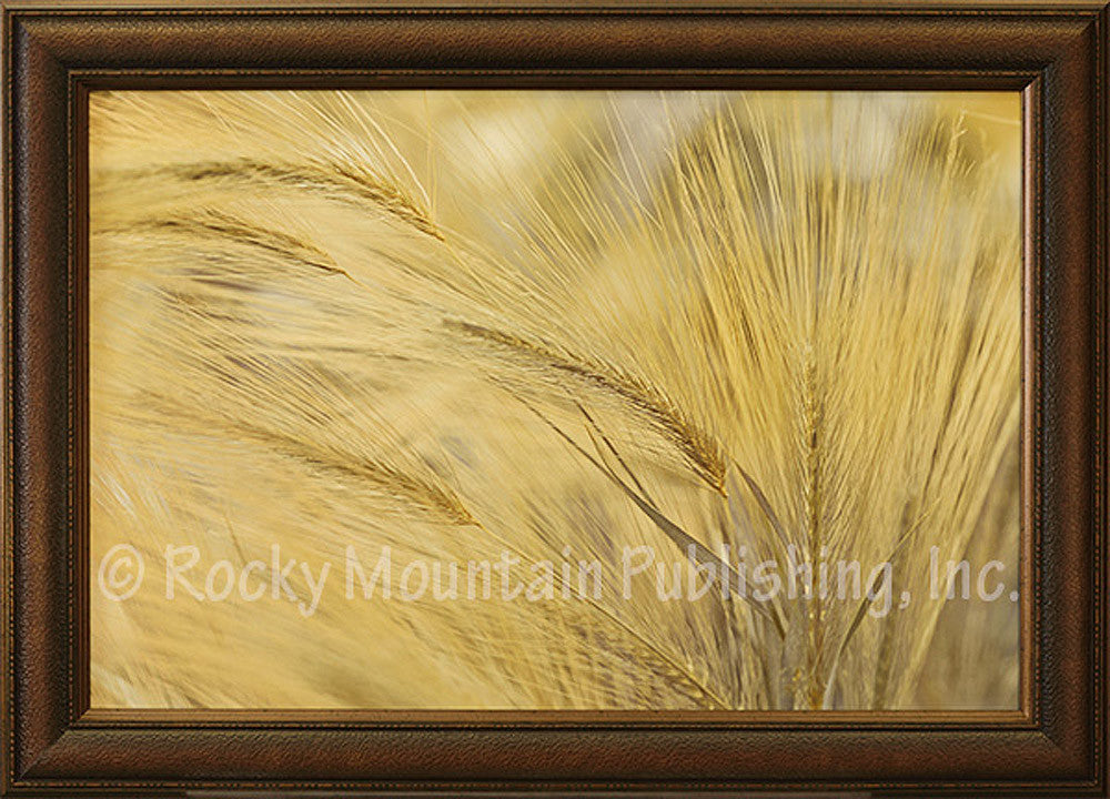 Foxtails - Framed Giclee Canvas by Frank Assaf