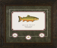 Brook Trout Framed Print by Gary Mansanarez