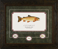 Cutthroat Framed Print by Gary Mansanarez