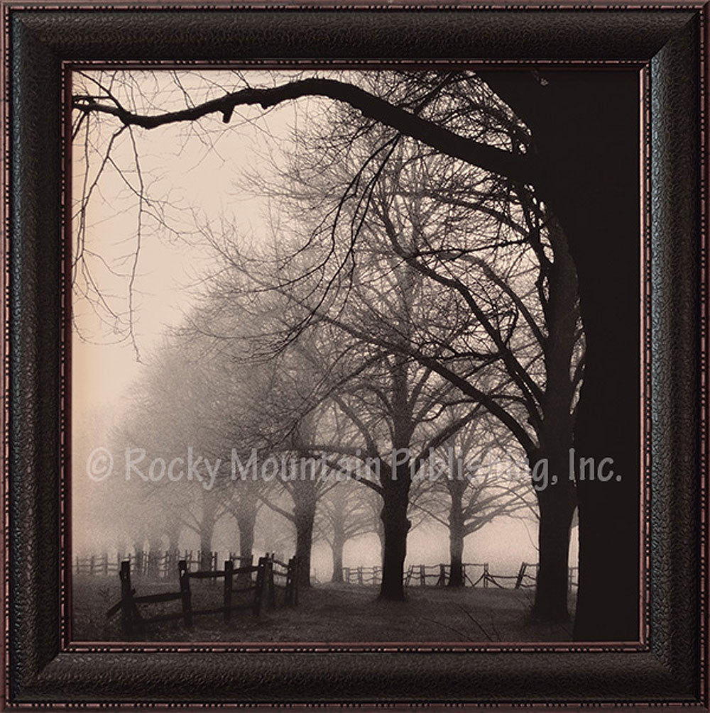 Black and White Morning Framed Print by Harold Silverman