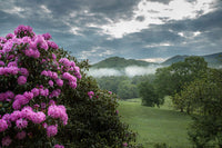 Rhodies Along the Pasture – Art Prints by Jason Clemmons