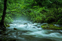 Streaming in the Smokies - Art Prints by Jason Clemmons