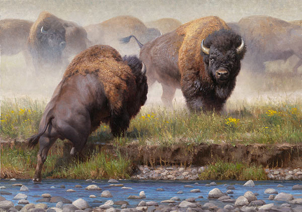 Yellowstone Face Off by Kyle Sims