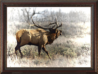 Bull Elk – Framed Giclee Canvas by Mitchell Mansanarez