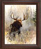 Bull Moose – Framed Giclee Canvas by Mitchell Mansanarez