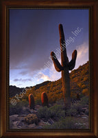 Desert Shadows – Framed Giclee Canvas by Mitchell Mansanarez