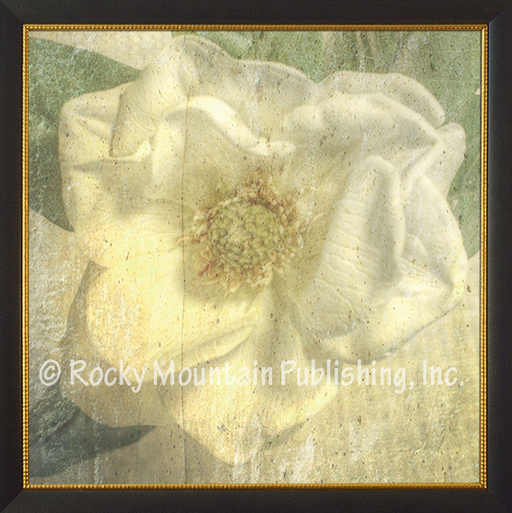 Magnolia – Framed Giclee Canvas by Mitchell Mansanarez
