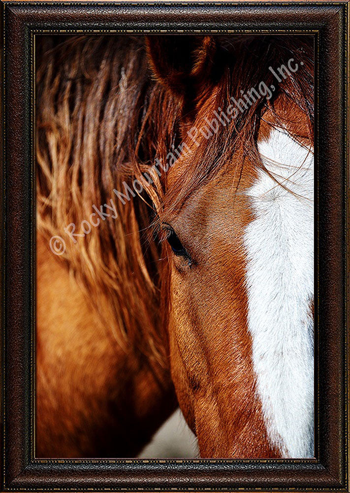 Sorrel I – Framed Giclee Canvas by Mitchell Mansanarez