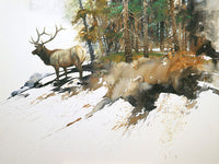 High Country Elk by Morten E. Solberg