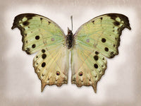 Forest Mother of Pearl - Art Prints by Richard Reynolds