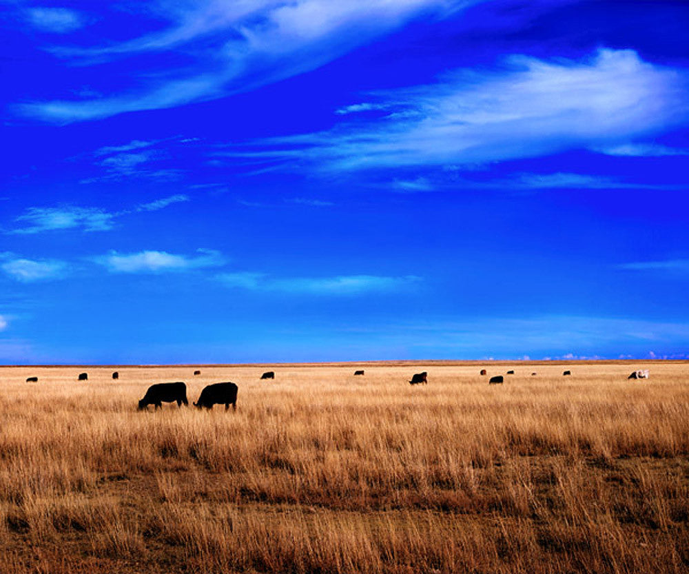 High Plains – Art Prints by Richard Reynolds