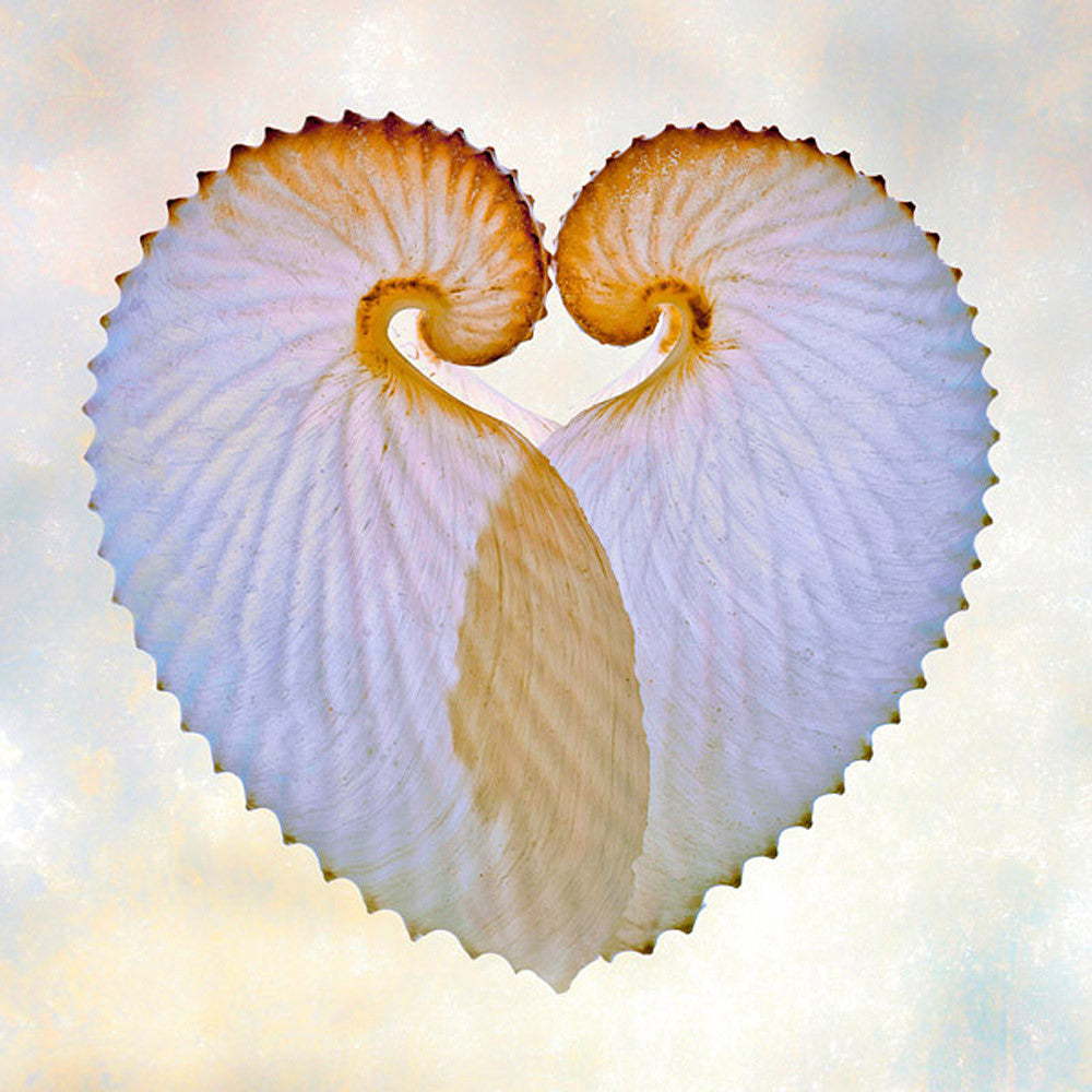 Paper Nautilus I - Art Prints by Richard Reynolds