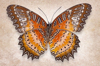 Red Lacewing - Art Prints by Richard Reynolds
