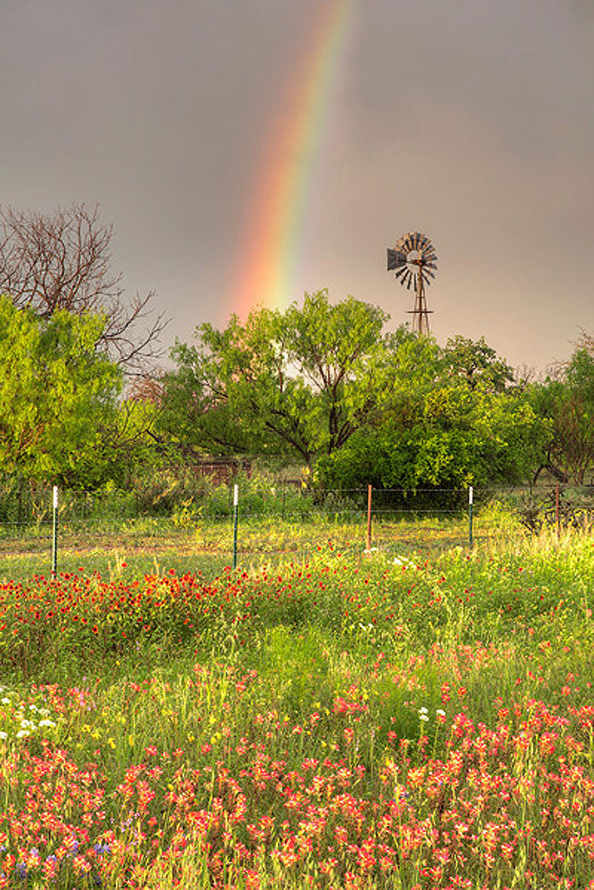 Texas Wildflowers A Windmill and A Rainbow by Rob Greebon