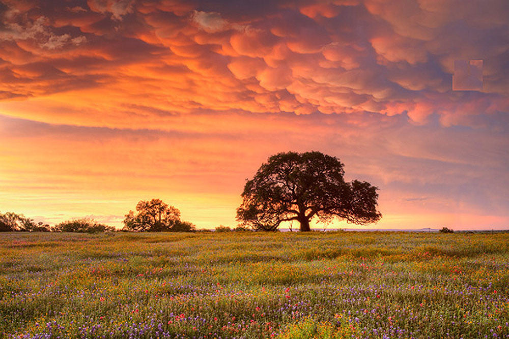 Wildflowers at the End of the Storm 1 by Rob Greebon