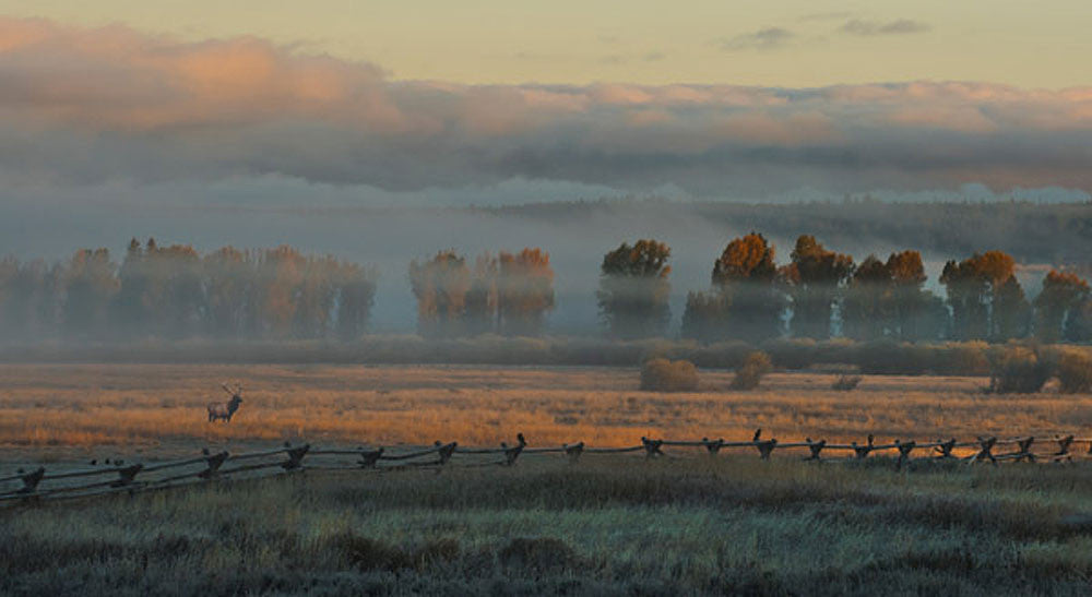 In the Morning Mist by Robert Dawson