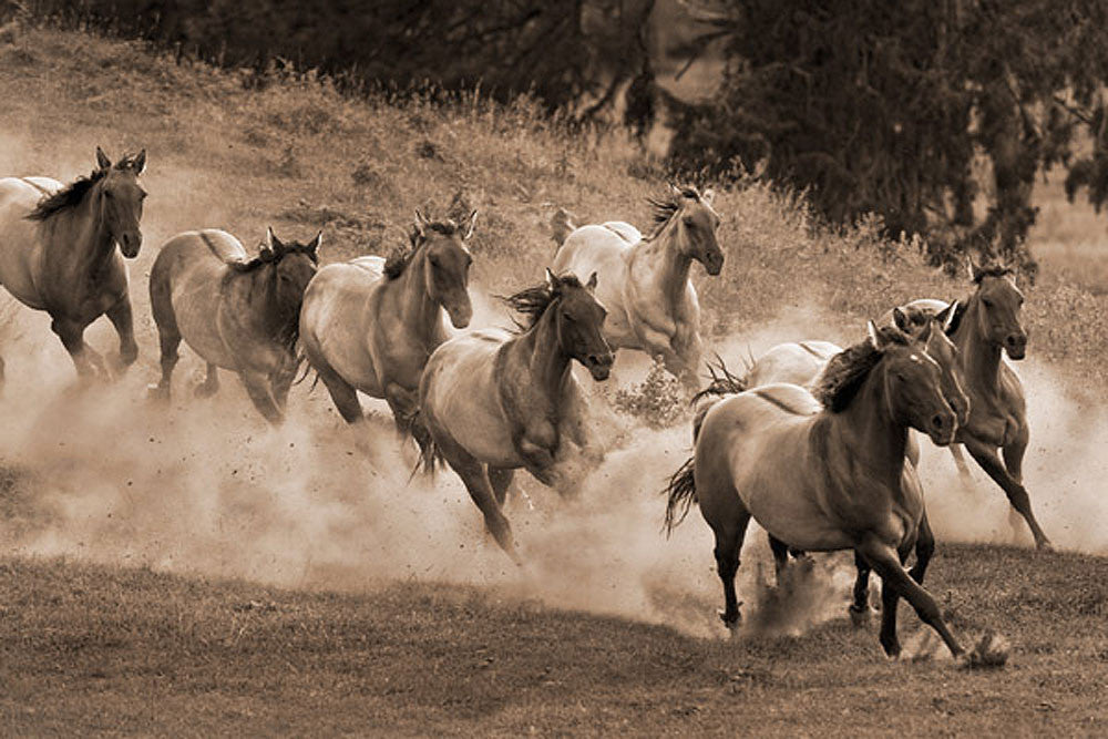 Leader of the Pack by Robert Dawson