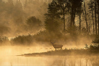 Morning Muley by Robert Dawson