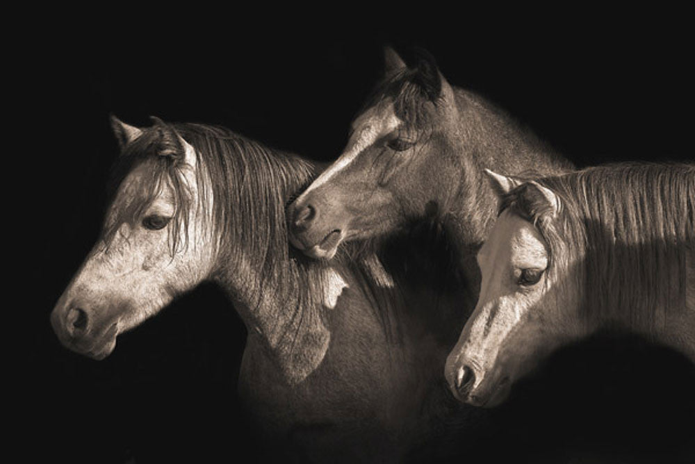 Three Ponies by Robert Dawson